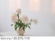 Купить «peonies flowers in vase on white background», фото № 30876110, снято 4 июня 2019 г. (c) Майя Крученкова / Фотобанк Лори