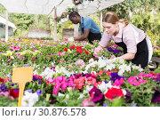 Florist woman working in greenhouse. Стоковое фото, фотограф Яков Филимонов / Фотобанк Лори