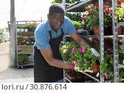 Купить «Man arranging flowers in glasshouse», фото № 30876614, снято 19 апреля 2018 г. (c) Яков Филимонов / Фотобанк Лори