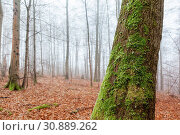 Купить «Haus im nebligen Wald stehend», фото № 30889262, снято 18 июля 2019 г. (c) age Fotostock / Фотобанк Лори