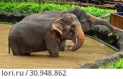 Купить «Feeding elephants in National park», видеоролик № 30948862, снято 8 июня 2019 г. (c) Игорь Жоров / Фотобанк Лори