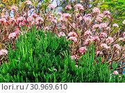 Купить «Beautiful tropical garden in Hawaii island», фото № 30969610, снято 9 апреля 2018 г. (c) easy Fotostock / Фотобанк Лори