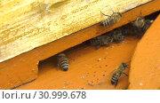 Купить «Горная пасека. Леток в улье. Часть 1. Mountain apiary. Notches in the hive. Part 2.», видеоролик № 30999678, снято 22 июня 2019 г. (c) Евгений Романов / Фотобанк Лори