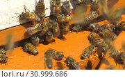 Купить «Горная пасека. Леток в улье. Mountain apiary. Notches in the hive.», видеоролик № 30999686, снято 22 июня 2019 г. (c) Евгений Романов / Фотобанк Лори