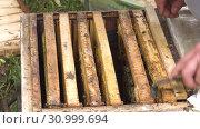 Купить «Горная пасека. Пчеловоды за работой. Mountain apiary. Beekeepers at work.», видеоролик № 30999694, снято 22 июня 2019 г. (c) Евгений Романов / Фотобанк Лори