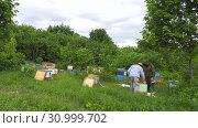 Купить «Горная пасека. Пчеловоды за работой. Mountain apiary. Beekeepers at work.», видеоролик № 30999702, снято 22 июня 2019 г. (c) Евгений Романов / Фотобанк Лори