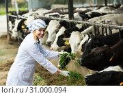 Купить «Female employee in cowhouse outdoors», фото № 31000094, снято 17 ноября 2019 г. (c) Яков Филимонов / Фотобанк Лори