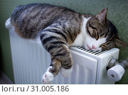 Купить «Furry striped pet cat lying on warm radiator rests and relaxes», фото № 31005186, снято 21 декабря 2017 г. (c) easy Fotostock / Фотобанк Лори