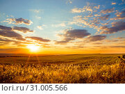 Saratov region, travel, landscape and nature of Russia. Yellow golden orange dramatic beautiful sunrise at dawn or dusk over endless fields, hills and meadows. The sun rises over the horizon in the morning or sets in the evening. Стоковое фото, фотограф Светлана Евграфова / Фотобанк Лори
