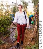 Купить «Woman gardener working with spraying apparatus in greenhouse, boy on background», фото № 31005918, снято 13 августа 2018 г. (c) Яков Филимонов / Фотобанк Лори