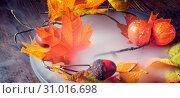 Купить «Autumn leaves in the mist», фото № 31016698, снято 18 июля 2019 г. (c) easy Fotostock / Фотобанк Лори