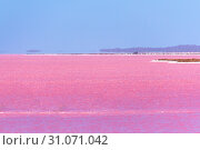 Pink Lake next to Gregory in Western Australia with Fata Morgana at the horizon. Стоковое фото, фотограф Maximilian Wollrab / easy Fotostock / Фотобанк Лори