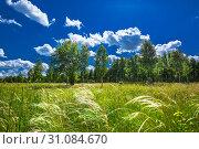 Купить «Летний пейзаж с молодой берёзовой рощей, синим летним небом и ковылём», фото № 31084670, снято 22 июня 2019 г. (c) Евгений Мухортов / Фотобанк Лори
