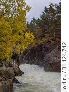 Купить «Rapid stream river yellow tree waterfall», фото № 31124742, снято 15 октября 2017 г. (c) easy Fotostock / Фотобанк Лори