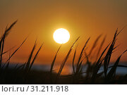 Beautiful scenery of the setting sun against the background of the spikelets of grass moving from the whiff of the wind. Стоковое фото, фотограф YAY Micro / easy Fotostock / Фотобанк Лори