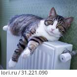 Купить «Furry striped pet cat lying on warm radiator rests and relaxes», фото № 31221090, снято 21 декабря 2017 г. (c) easy Fotostock / Фотобанк Лори