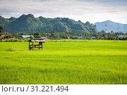 Купить «Small hovel in the farm rice landscape of Thailand», фото № 31221494, снято 29 августа 2015 г. (c) easy Fotostock / Фотобанк Лори