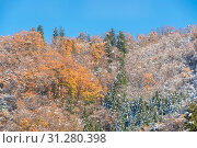 Купить «Autumn Forest landscape with snow on tree at Fujikawaguchiko Japan», фото № 31280398, снято 17 июля 2019 г. (c) easy Fotostock / Фотобанк Лори