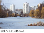 Winter view of city park with ice frozen pond and flock of ducks. Стоковое фото, фотограф YAY Micro / easy Fotostock / Фотобанк Лори