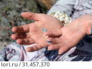 Купить «Small butterfly sits on the hand», фото № 31457370, снято 27 июля 2015 г. (c) Argument / Фотобанк Лори
