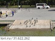 Купить «Flock of Barnacle geese (Branta leucopsis) coming from park to sea. Helsinki, Finland», фото № 31622262, снято 30 июня 2019 г. (c) Валерия Попова / Фотобанк Лори