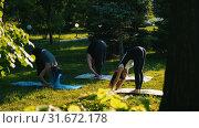 Купить «Two young women doing yoga in the park with their instructor - bending down to the ground», видеоролик № 31672178, снято 29 мая 2020 г. (c) Константин Шишкин / Фотобанк Лори
