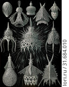 Illustration shows microorganisms in the class Radiolaria. Crytoidea. - Flaschenstrahlinge, 1 print : photomechanical , sheet 36 x 26 cm., 1904. Ernst... (2014 год). Редакционное фото, фотограф Artokoloro / age Fotostock / Фотобанк Лори