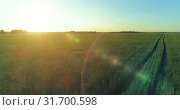 Купить «Low altitude flight above rural summer field with endless yellow landscape at summer sunny evening. Sun rays on horizon.», видеоролик № 31700598, снято 20 мая 2019 г. (c) Александр Маркин / Фотобанк Лори