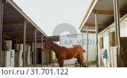 Купить «Horse in stable 4k», видеоролик № 31701122, снято 15 сентября 2018 г. (c) Wavebreak Media / Фотобанк Лори