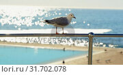 Купить «Bird perching on a railing in the beach 4k», видеоролик № 31702078, снято 10 сентября 2018 г. (c) Wavebreak Media / Фотобанк Лори