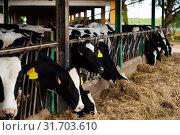 Modern farm cowshed with cows. Стоковое фото, фотограф Яков Филимонов / Фотобанк Лори