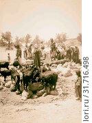 Купить «Goats with people. 1898, Middle East, Israel and/or Palestine», фото № 31716498, снято 29 июня 2018 г. (c) age Fotostock / Фотобанк Лори