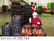 Купить «Woman showing boxes with peaches», фото № 31765154, снято 17 октября 2019 г. (c) Яков Филимонов / Фотобанк Лори