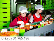 Woman working on producing sorting line at fruit warehouse, preparing apricots for packaging. Стоковое фото, фотограф Яков Филимонов / Фотобанк Лори