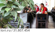 Купить «Small green trees decorate a cafe on the street», видеоролик № 31807454, снято 27 декабря 2018 г. (c) Aleksandr Sulimov / Фотобанк Лори