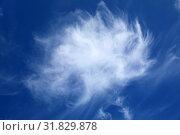 Перистые облака летним днем. Стоковое фото, фотограф Григорий Писоцкий / Фотобанк Лори