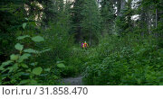 Купить «Rear view of hiker couple walking on a pathway in the dense forest 4k», видеоролик № 31858470, снято 16 июля 2018 г. (c) Wavebreak Media / Фотобанк Лори