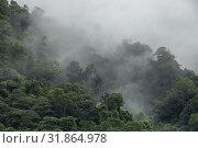 Misty forest at Telok Melano, Sematan, Sarawak, Malaysia. Стоковое фото, фотограф Chua Wee Boo / age Fotostock / Фотобанк Лори