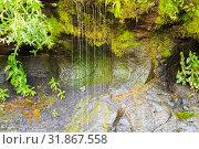 "Купить «Ecology and nature. The source of clean drinking spring water among stone rocks and moist fresh green moss. Spring ""Wailing Wall"" in the Saratov region village Gremyachka», фото № 31867558, снято 6 июля 2019 г. (c) Светлана Евграфова / Фотобанк Лори"
