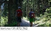 Купить «Front view of young caucasian hiker couple with backpack hiking in dense forest 4k», видеоролик № 31872762, снято 16 июля 2018 г. (c) Wavebreak Media / Фотобанк Лори