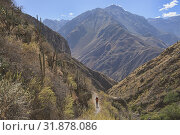 Looking out at the immense Colca Canyon, Cabanaconde, Peru. Стоковое фото, фотограф Dave Stamboulis / age Fotostock / Фотобанк Лори