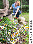 Купить «Beauty chamomile growing in backyard near wooden patio, female gardener is blurred on a background», фото № 31880366, снято 20 июля 2019 г. (c) Кекяляйнен Андрей / Фотобанк Лори