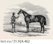 'FOIGH-A-BALLAGH,' THE WINNER OF THE GREAT ST. LEGER AND GRAND DUKE MICHAEL STAKES, DRAWN BY HERRING. (2013 год). Редакционное фото, фотограф Artokoloro / age Fotostock / Фотобанк Лори
