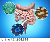Bacteries of human intestine, Intestinal flora gut health concept. Стоковое фото, фотограф Maksym Yemelyanov / Фотобанк Лори