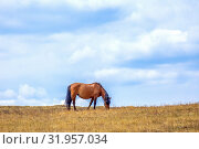 Купить «Hungry horses graze in early spring in the meadow.», фото № 31957034, снято 24 апреля 2019 г. (c) Акиньшин Владимир / Фотобанк Лори