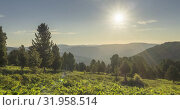 Купить «Mountain meadow timelapse. Wild nature and rural field. Clouds, trees, green grass and sun rays movement. Camera motion.», видеоролик № 31958514, снято 15 июля 2019 г. (c) Александр Маркин / Фотобанк Лори