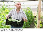 Купить «Male professional gardener holding crate with cucumbers», фото № 31994454, снято 16 декабря 2019 г. (c) Яков Филимонов / Фотобанк Лори
