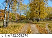 Купить «Золотая осень. Дорога в осеннем лиственном лесу, солнечный день», фото № 32008370, снято 18 октября 2017 г. (c) Ольга Коцюба / Фотобанк Лори