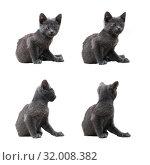 Купить «Маленький серый котенок (коллаж из нескольких снимков), изолировано на белом фоне», фото № 32008382, снято 17 сентября 2019 г. (c) Екатерина Овсянникова / Фотобанк Лори