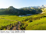 Купить «Cows grazing in highland pastures of Covadonga», фото № 32009378, снято 15 июля 2019 г. (c) Яков Филимонов / Фотобанк Лори